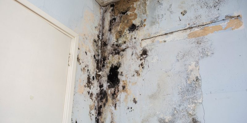 water damage causing mould growth on wall